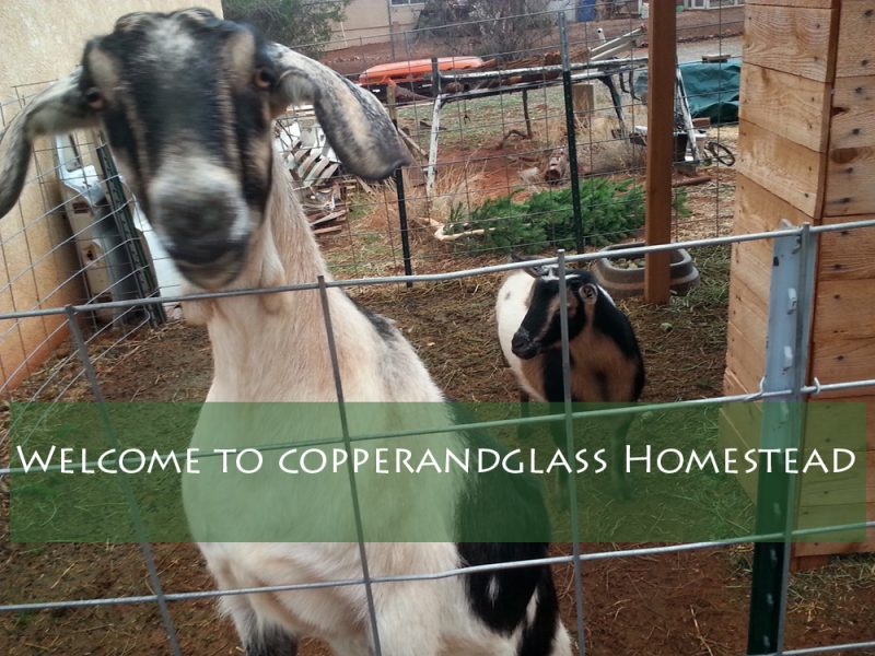 Milk goats added to the family at Copperandglass Homestead