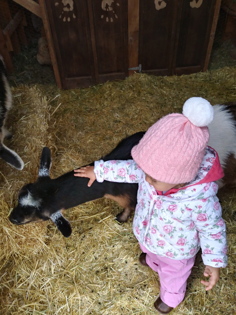 Granddaughter tending to the dairy goats at coperandglasshomestead.