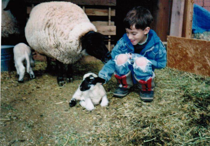Homestead // lambs // lambing // copperandglass homestead